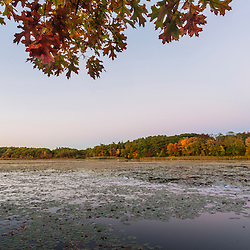 Fall colors on the shores of a pond in Marshfield, Massachusetts. Hoyt-Hall Preserve.