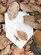 A childs drawing discarded and buried under leaves at Angkor, Siem Reap Province, Cambodia