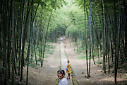 """Chinese tourists walk on a path between bamboo trees in the Bamboo Sea in Yibin, August 06, 2014.<br /> <br /> Shunan Bamboo Sea (Chinese: 蜀南竹海;pinyin: shǔnánzhúhǎi) covers an area of over 120 kilometers in Sichuan Province.<br /> This forest has won its fame for its unique green and graceful trees: bamboos are here, there and everywhere.<br /> It is one of the shooting places of the Oscar award- winning movie """"Crouching Tiger, Hidden Dragon"""" directed by Ang Lee.<br /> <br /> © Giorgio Perottino"""