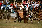 MEXICO, SPORTS, YUCATAN small town bullfight during festival