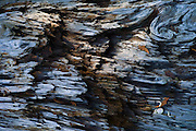 Detail image of a log in South Puget Sound, Washington, Pacific Northwest by Randy Wells