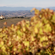 SAN GIMIGNANO, ITALY - OCTOBER 25: An autumn scene near San Gimignano in Tuscany, Italy, showing vine foliage and olive trees and a hilltop property. San Gimignano, Tuscany, Italy. 25th October 2017. Photo by Tim Clayton/Corbis via Getty Images)