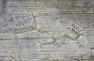 Petroglyph, rock carving, of two deer being chased by a dog in a hunting scene Carved by the ancient Camunni people in the iron age between 900-1600 BC. Rock no 24,  Foppi di Nadro, Riserva Naturale Incisioni Rupestri di Ceto, Cimbergo e Paspardo, Capo di Ponti, Valcamonica (Val Camonica), Lombardy plain, Italy .<br /> <br /> Visit our PREHISTORY PHOTO COLLECTIONS for more   photos  to download or buy as prints https://funkystock.photoshelter.com/gallery-collection/Prehistoric-Neolithic-Sites-Art-Artefacts-Pictures-Photos/C0000tfxw63zrUT4<br /> If you prefer to buy from our ALAMY PHOTO LIBRARY  Collection visit : https://www.alamy.com/portfolio/paul-williams-funkystock/valcamonica-rock-art.html