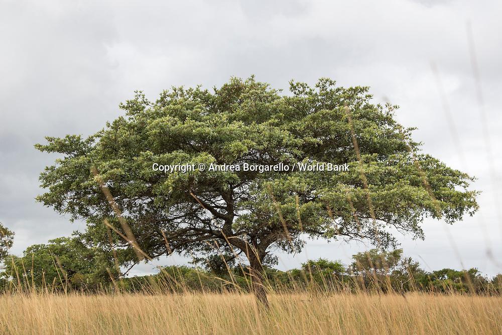 Maputo Elephant Game Reserve, Mozambique