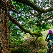 Heather Goodrich rides her own personal test piece in the gated community in which she lives during spring blossom season in La Conner, Washington.