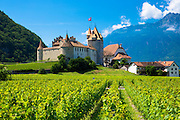 Chablais vines in front of the Chateau de Aigle and the village of Aigle in the Chablais region of Switzerland