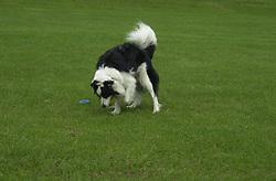 Eddie Sander with his Dogs Jackson and Inka<br /><br />18 June 2004<br /><br />Copyright Paul David Drabble<br /> [#Beginning of Shooting Data Section]<br />Nikon D1 <br /> Focal Length: 50mm<br /> Optimize Image: <br /> Color Mode: <br /> Noise Reduction: <br /> 2004/06/18 09:54:08.6<br /> Exposure Mode: Manual<br /> White Balance: Auto<br /> Tone Comp: Normal<br /> JPEG (8-bit) Fine<br /> Metering Mode: Center-Weighted<br /> AF Mode: AF-C<br /> Hue Adjustment: <br /> Image Size:  2000 x 1312<br /> 1/250 sec - F/6.3<br /> Flash Sync Mode: Not Attached<br /> Saturation: <br /> Color<br /> Exposure Comp.: 0 EV<br /> Sharpening: Normal<br /> Lens: 50mm F/1.8<br /> Sensitivity: ISO 200<br /> Image Comment: <br /> [#End of Shooting Data Section]
