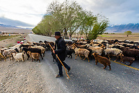Men herding goats across the Karakoram Highway near Tashkurgan (means Stone Fortress in Uyghur), at 10,100 feet. It was a caravan stop on the Silk Road and all routes of the Silk Road converged here to journey southward to Pakistan. It sits on the borders of both Afghanistan and Tajikistan, and is close to the border of Kyrgyzstan and Pakistan.  The majority population in the town are ethnic Mountain Tajiks. Xinjiang Province, China.