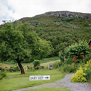 The landscape around the West Highland Dairy in the village of Achmore by the Kyle of Lochalsh in the Scottish Highlands. Owned by Kathy and David Biss, the West Highland Dairy was established in 1987 and as well as managing their own small commercial dairy business, they have taught a great number of prospective cheesemakers during the last 20 years.
