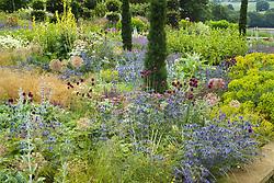 Mixed borders at Broughton Grange. Planting includes Eryngium x zabelii, Allium sphaerocephalon, Stachys byzantina and Taxus baccata 'Fastigiata'