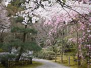 Japan, Honshu, Kyoto, Kinkakuji temple garden
