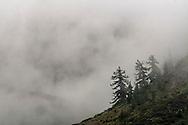 Clouds shroud mountain ridge and trees in McGee Creek, Mono County, Eastern Sierra, California