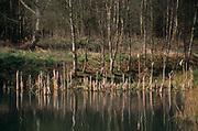 ADD3G0 Wetland pond on River Tang, Tangham, Suffolk, England