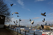 With the Shard, Tower Bridge and the capital's financial district in the distance and riding over river vessels, pigeons take-off after feeding in Bermondsey on the southern riverbank of the Thames, on 16th January 2020, in London, England.