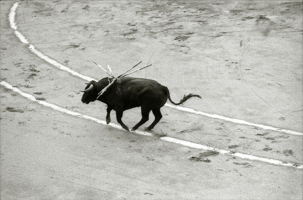 A bullfight in Barcelona, Spain. <br /> [This photograph is currently licensed through Millennium Images - please contact the photographer for details]