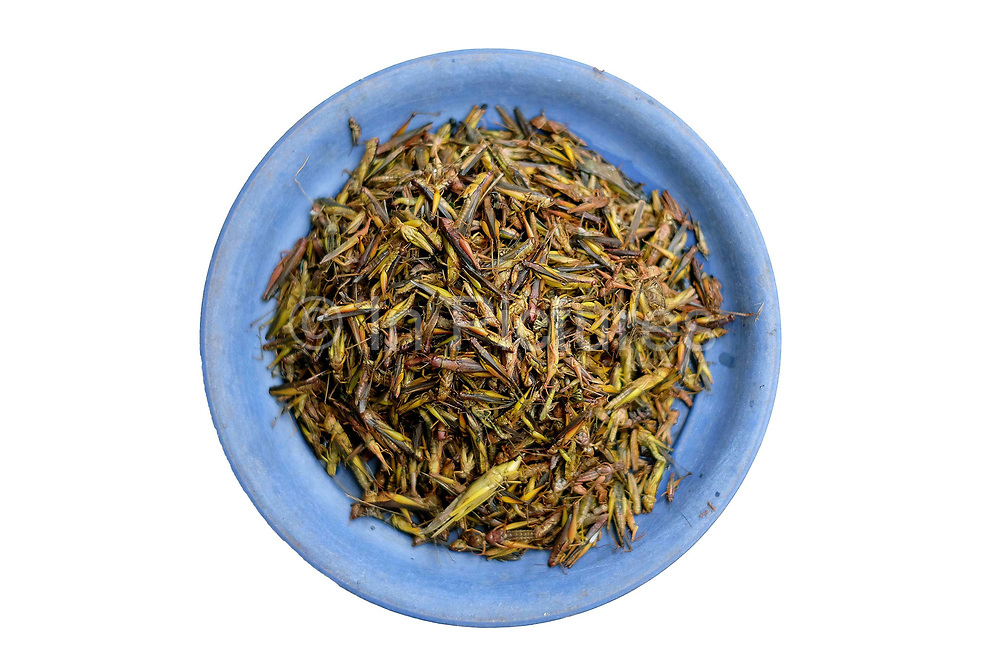 Fried grasshoppers for sale at Don Mak Kai market on the outskirts of Vientiane city, Lao PDR. The Lao are very reliant on products collected or caught from the wild. Insects such as ants, crickets, wasps and their nests are especially easy to find in nearby forests and fields. A walk through any market will illustrate the agro and bio-diversity of Laos.