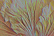 Relief design <br /> of Hibiscus flower Photo art images with 3D, bas relief effect and simulated metallic photos
