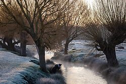 © Licensed to London News Pictures. 28/12/2020. London, UK. A walker enjoys a frosty sunrise in Richmond Park, South West London as it turned into a winter wonderland this morning as temperatures dropped to -3c in the South East today. The Met Office has issued a yellow weather warning for snow and ice for much of the country with heavy snow falls in Wales, West Midlands, and Cheshire last night. Photo credit: Alex Lentati/LNP