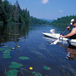 Errol, NH. Kayaking on the Androscoggin River.  Yellow Pond Lily, Nuphar lutea. 13 Mile Woods.  Northern Forest, Great North Woods.