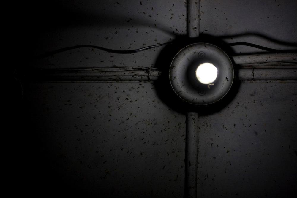 Ibiai_MG, Brasil...Detalhe de insetos em uma lampada em Ibiai, Minas Gerais...Detail of a insects in a lamp in Ibiai, Minas Gerais...Foto: LEO DRUMOND /  NITRO