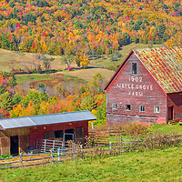 Vermont farm fall foliage scenery of Maple Grove Farm in South Royalton, VT of the  North East Kingdom of Vermont.<br /> <br /> Maple Grove Farm rural Vermont photography images are available as museum quality photo, canvas, acrylic, wood or metal prints. Wall art prints may be framed and matted to the individual liking and New England interior design projects decoration needs.<br /> <br /> Good light and happy photo making!<br /> <br /> My best,<br /> <br /> Juergen