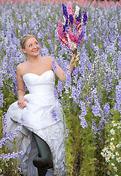 © Licensed to London News Pictures. 30_07_2015. Hurley Common, North Warwickshire, UK. When brides bought confetti petals made from delphiniums for their wedding day they started asking if they could pose in the fields where they had been grown. Now owner LILIAN (correct) SYKES welcomes brides to her farm on a regular basis to have pictures taken wearing their wedding dresses. Pictured, bride NICKI CLAYBROOK, dons wellies to go amongst the colourful flowers grown for their petals and dried flower bouquets to have her picture taken. LILIAN purchased the derelict farm five years ago and had the idea of growing delphiniums to the surprise of local farmers. Last year LILIAN produced millions of confetti petals in eight different colours from her eight acres of flower fields. The petals and dried flowers found their way into major high street retailers as well as being sold online. Photo credit: Dave Warren/LNP