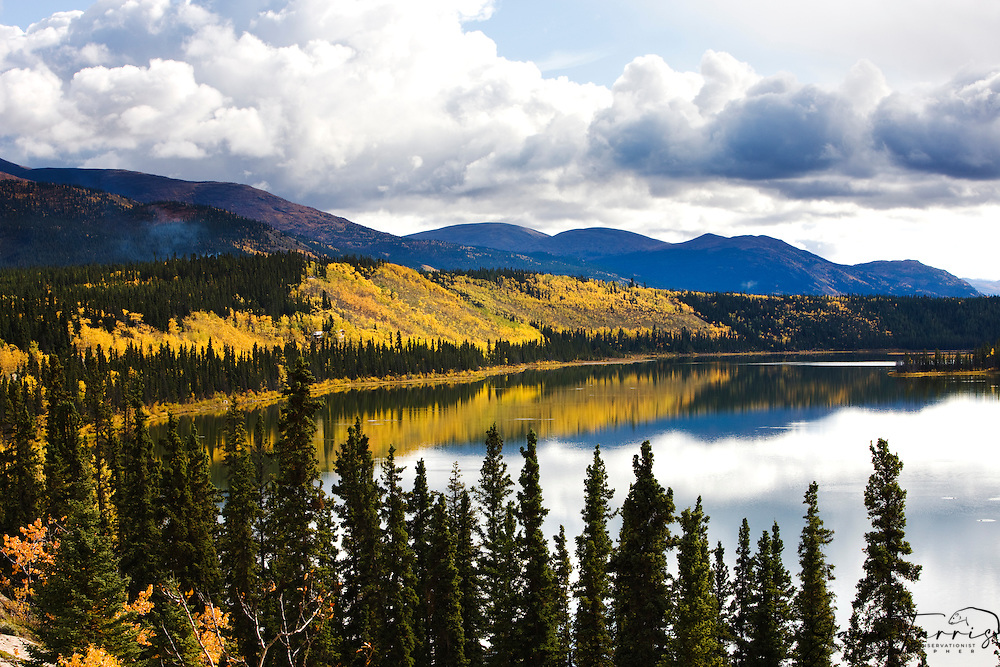 Autumn leaves and storm clouds surround a lake in the sub-arctic of Canada's Yukon Territory,Cowley Lake, the Yukon Territory,Canada