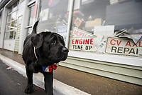 Lucky Jr. was humbled by all those who came to wish him a happy birthday at Sanborn's Auto on Saturday.  <br /> (Karen Bobotas/for the Laconia Daily Sun)