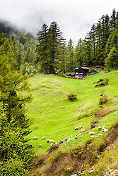 Pastoral Switzerland Zermatt