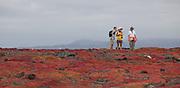 Tourists take in the view on South Plaza Island while surrounded by orange Sesuvium plants (Sesuvium edmondstonei). Galapagos Archipelago - Ecuador.