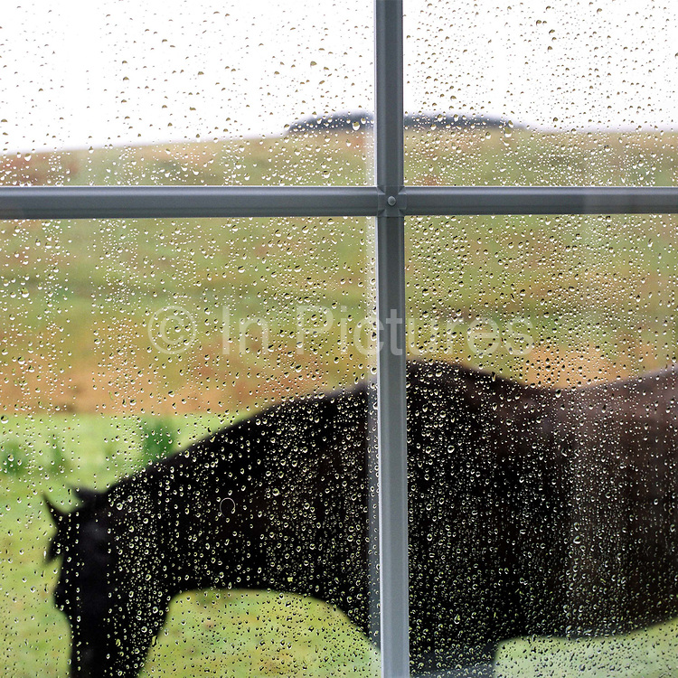 Looking through the rainy living room window of Warren Farm at a black horse standing asleep outside, Simonsbath, Exmoor, UK. Warren farm is known as the most isolated farm on Exmoor.