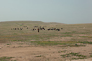 The old pastoral and nomadic past of the Berber people of Morocco can still be witnessed on the road to Essaouira.