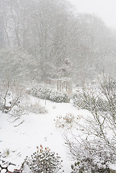 Snow falling at Glebe Cottage. Overhead view of the garden. Solitary blackbird on tree