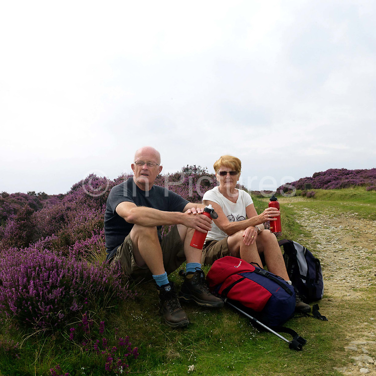 A pair of hikers take a rest amongst the purple heather whilst walking at the Hole of Horcum, North York Moors, North Yorkshire, UK