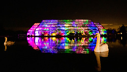 © Licensed to London News Pictures. 30/11/2018. London, UK. Swans are reflected in the lake in front of the illuminated Glass House at RHS Wisley Gardens. Trees and plants have been illuminated at Royal Horticulture Society Wisley Gardens for the Christmas Glow seasonal event. Hundreds of different lights can be seen when following the trail throughout the gardens opening 1 December 2018 2 January 2019. Photo credit: Peter Macdiarmid/LNP