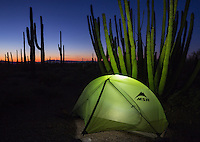 MSR tent illuminated from within at twilight in Organ Pipe National Monument, Arizona