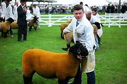 © Licensed to London News Pictures.14/07/15<br /> Harrogate, UK. <br /> <br /> A young boy stands with his sheep on display as judging takes place on the opening day of the Great Yorkshire Show.  <br /> <br /> England's premier agricultural show opened it's gates today for the start of three days of showcasing the best in British farming and the countryside.<br /> <br /> The event, which attracts over 130,000 visitors each year displays the cream of the country's livestock and offers numerous displays and events giving the chance for visitors to see many different countryside activities.<br /> <br /> Photo credit : Ian Forsyth/LNP