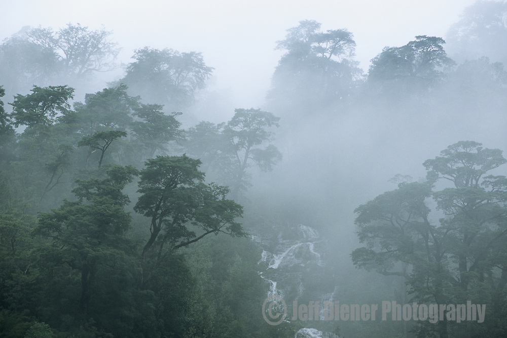 Fog lifts from the temperate rainforest in Pumalin Park, Patagonia, Chile.