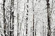 B&W winter landscape fine art photo 8