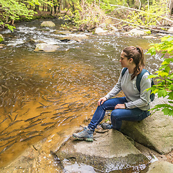 A woman watches alewives during their spring spawning run in a pool in Mill Brook in Westbrook, Maine.