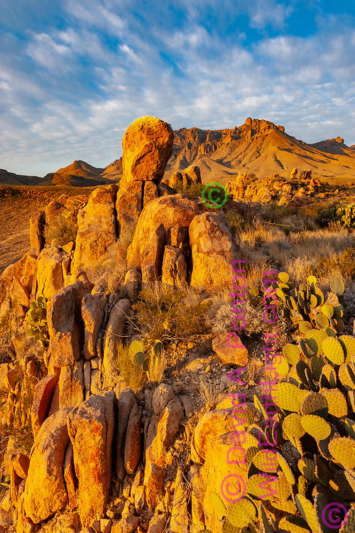 Vertical rock group and a large prickly pear cactus are set in the Chihuahuan Desert leading to the Chisos Mountains, Big Bend National park, TX, © David A. Ponton