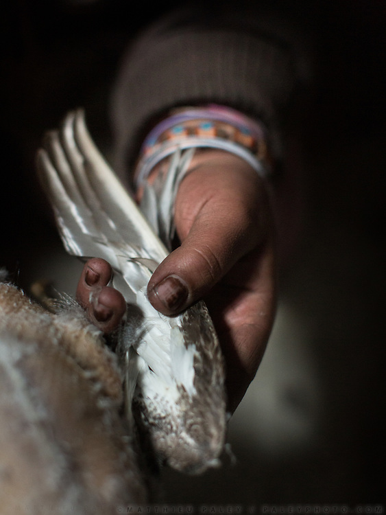 Holding the wing of a duck. Plucking, and cooking ducks. February is hunting duck season, as the migratory animals return fat from India, on their way back to Siberia. In Shimshal, one of the remotest village in the Karakoram mountains, and the highest settlement in the Hunza and Gojal region.