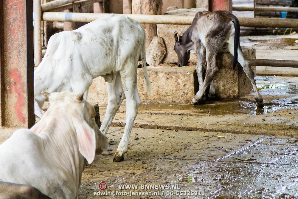 THA/Bangkok/201607111 - Vakantie Thailand 2016 Bangkok, Heilige koe in de tempel