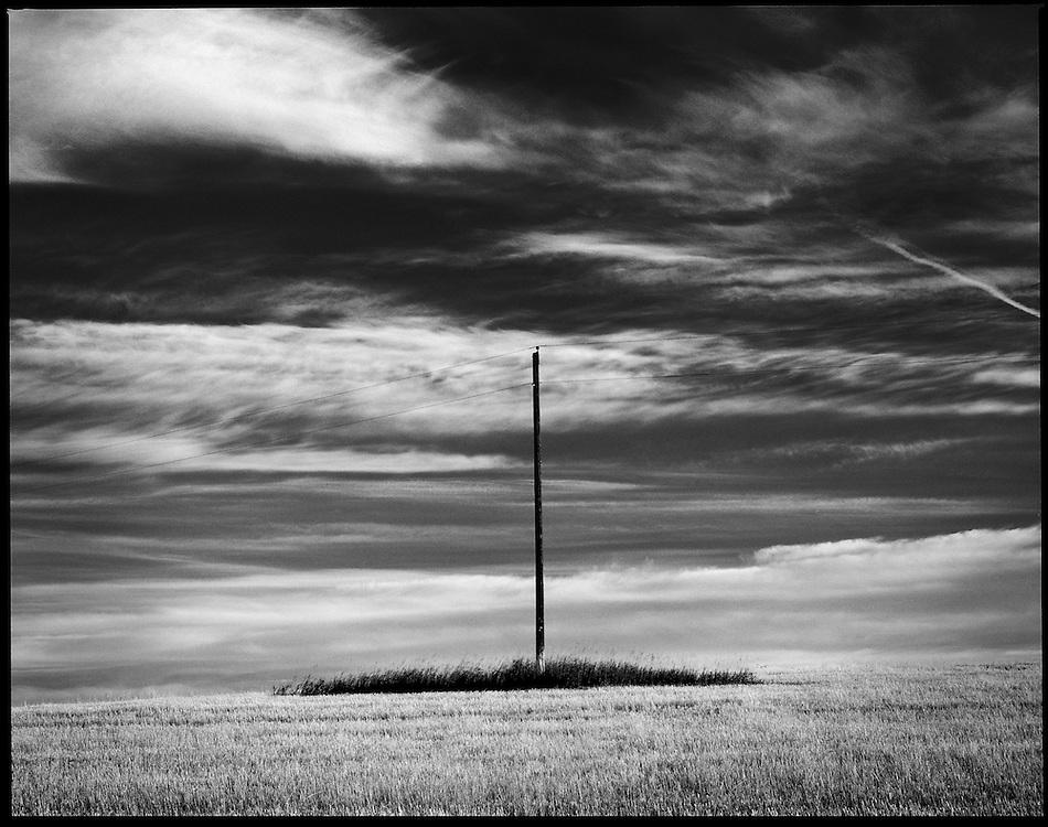 A telephone pole in a big pasture