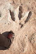 Dinosaur footprint, Canyonlands National park, Utah, United States of America
