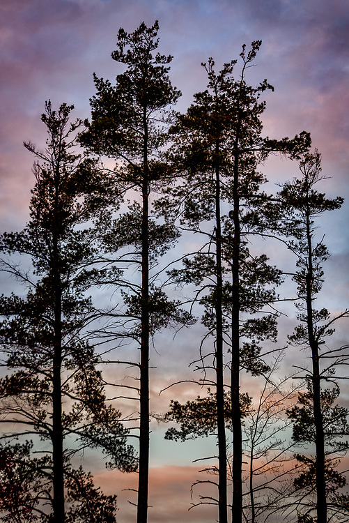 The stunning backdrop of an autumn sunset brings the treetops to life.