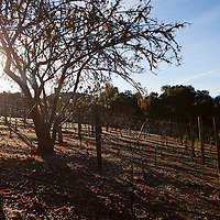 USA, California, Carmel. Holman Ranch vineyards.