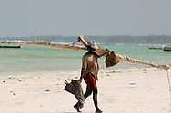 A fisherman returning from the sea carrying his dhow sail along the beach.<br /> Jambiani, Zanzibar, Tanzania
