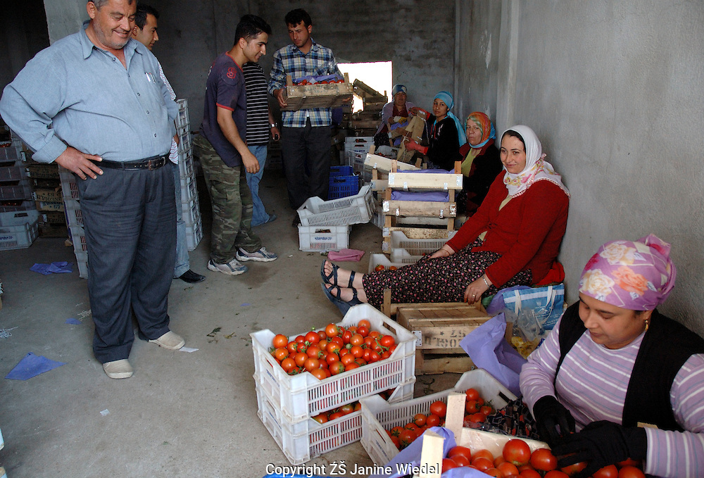 Agricultural workers sorting at tomatoes at distribution depot in small town of Yesilkoy