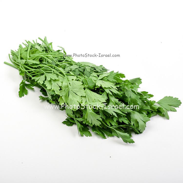 Fresh and organic Parsley (garden parsley Petroselinum crispum) on white background